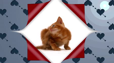 újra : Animation of wallpaper with heart and arrow pattern peeled back from the centre to reveal red underside and a kitten, then covering up again Stock mozgókép