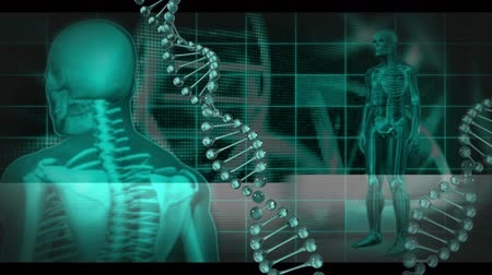 csontváz : Animation of a green revolving human body and a DNA strand on a dark background