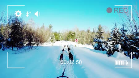 načasování : Animation of dog sledding, seen on a screen of a digital camera in record mode with icons and timer