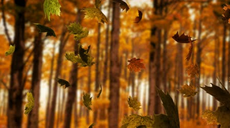 légköri : Animation of colourful leaves falling in autumn in a forest