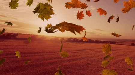 légköri : Animation of colourful leaves falling in autumn in countryside