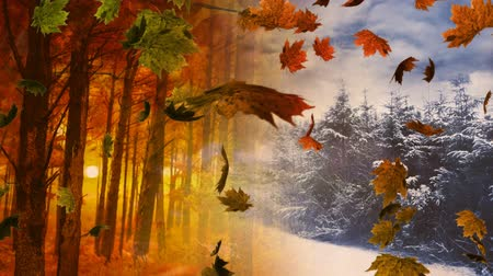 outonal : Animation of colourful leaves falling with autumnal and winter scenery in the background