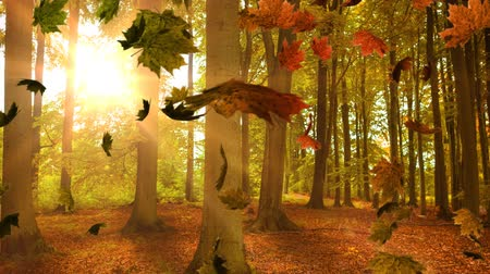 golden falls : Animation of colourful leaves falling in autumn in a forest