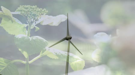 odpowiedzialność : Animation of turning wind turbine with flowers in the foreground