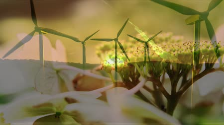 environmental awareness : Animation of turning wind turbines with flowers in the foreground
