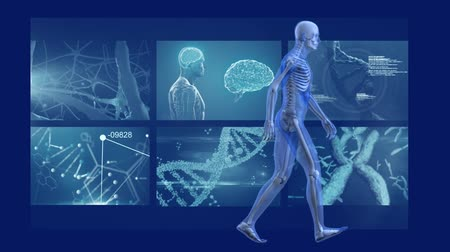 geny : Animation of 3d blue model of human walking in front of magnetic resonance imaging scan screens in the background. Global medicine science and research network digitally generated image.
