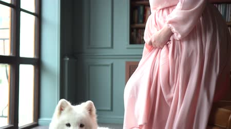 large breed dog : Young pregnant woman in pink dress and her big white dog Stock Footage