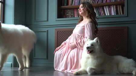 cosiness : Beautiful pregnant woman in a pink dress is sitting on the floor with her two big white dogs Stock Footage