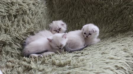 nicely : Three kittens is falling asleep on sofa