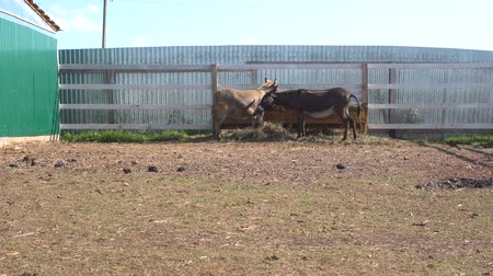 flâmula : close up view of donkeys grazing in corral with wooden fence at farm Stock Footage