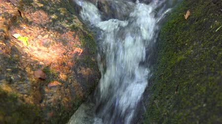 torrente : Mountain river flowing in tropical forest. Stream river water from waterfall flowing on large stones Vídeos