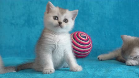 çok güzel : Baby cats, kittens are look like health. Someones eyes are very good and happy. New born pets are very lovely