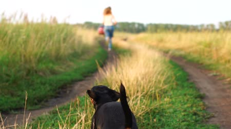 fél : Small dog catches up with a girl running along the road