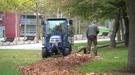 yüksek sesle : October 23, 2018. Germany, Dusseldorf. Caucasian male worker in uniform and protection of a city park worker. Autumn cleaning of fallen leaves. Gardener using his leaves in the garden. Stok Video