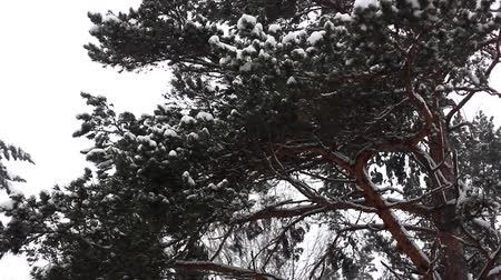 walkthrough : branches in the snow