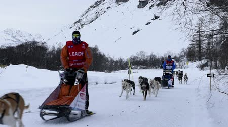 d day : Vanoise, FRANCE - JANUARY 18, 2016 - the GRAND ODYSSEY the hardest race mushers in Savoie Mont Blanc, LEADER R. Coste, JP PONTIER N12, N3 D. JUILLAGUET, N8 A. Kraft, Vanoise, Alps
