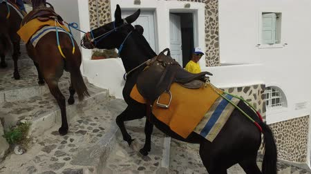 shepherds house : Oia (Santorini island) JUNE 01, 2016: donkey ride is a typical mean of transportation in the islandof Santorini. in Oia donkeys are used to transporting tourists from the bay Ammoudy to the top of the city.