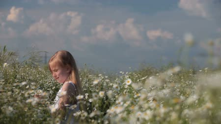 stokrotki : Child picking flowers on spring meadow