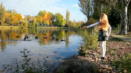 yeşilbaş : Little girl feeding mallard ducks in a city park