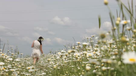 prado : pregnant young woman walking away through chamomile meadow in spring