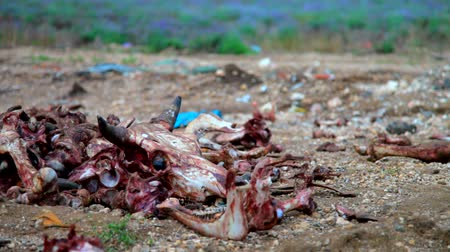 szemét : Illegal dumping of organic wast from meat factory Stock mozgókép
