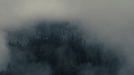 autumn forest : Smog Is Rolling Around From The Thicket Stock Footage