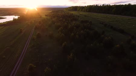 Aerial View Trees Growing Between Lake And Forest Stock Footage