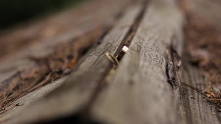 Rings Of The Bride And Groom Are Lying On Log