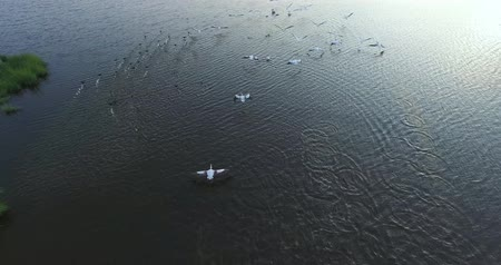 rudé moře : Aerial - Flight over the wetland of Kalohori in Thessaloniki, Greece