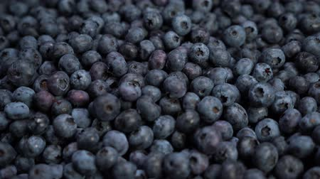 bilberry : close up shot of fresh blueberries, an excellent fruit to make juice, jam, cakes, pastries. the concept of nature, fresh fruit and blueberries Stock Footage