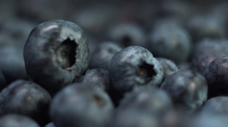 bilberry : Fresh blueberries extreme close-up, slow motion, macro footage.