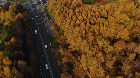 мостовая : Cars between autumn trees from birds eye view. Then view on city Стоковые видеозаписи