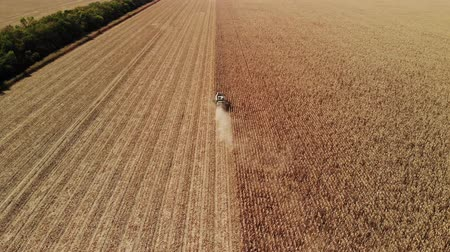 harvester machine : Aerial view modern combine harvesting wheat on the yellow wheat field. Back view. Agriculture scene.