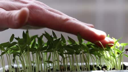 The seedling in the container mans hand gently holds on the shoots.
