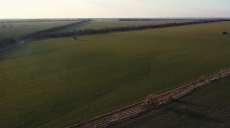 Video from a drone of a green field in the setting sun Stock mozgókép