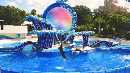 trained : Orlando, Florida. April 20, 2019. Dolphins jumping at show in Seaworld Theme Park-
