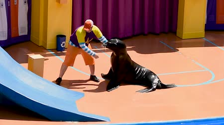 инструктор : Orlando, Florida. January 01, 2019. Trainer playing with sealion in Sea Lion High The New Class show at Seaworld.