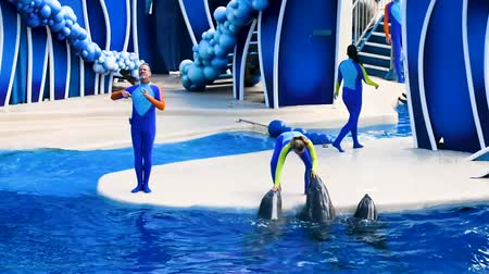 uses : Orlando, Florida. February 25, 2019. Dolphins in colorful Dolphin Day show; It is a festive celebration of our natural world at Seaworld in International Drive area. Stock Footage