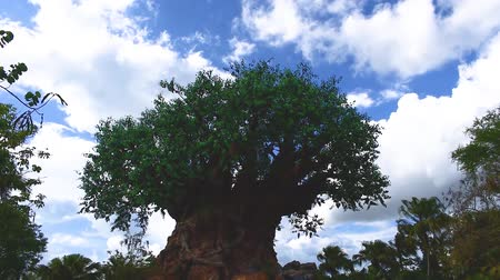 fantasie : Orlando, Florida. 2019. Prachtig uitzicht op Tree of Life op Animal KIngdom. Stockvideo