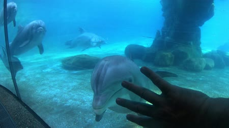 Orlando, Florida. May 29, 2019. Nice bottlenose dolphin stops and looks at the person moving her hand at Seaworld. Стоковые видеозаписи