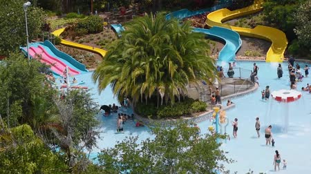 delfín : Orlando, Florida. June 03, 2019. Parent and kids enjoying slides and pool at Aquatica.