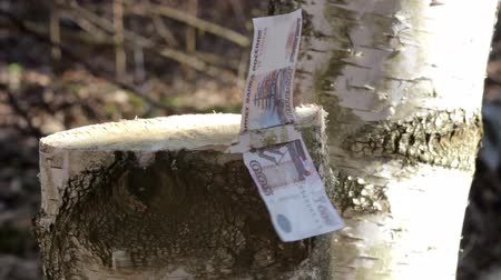 doesnt : Money on the stump. St. Petersburg. Russia Stock Footage