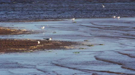 délre : Gulls on the sea shore