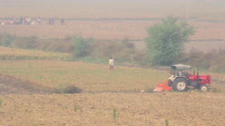 guangxi : Indian farmers manually harvesting rice in India