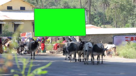 blank : Billboard chromakey. India. timelapse