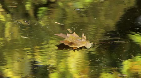 retirement : Yellow leaves float in a pond in an autumn Park Stock Footage