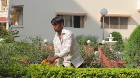 indian ethnicity : Indian gardener trims the bushes Stock Footage