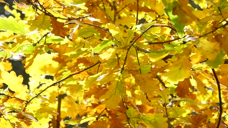 autumnal : Leaves on a tree branch in autumn