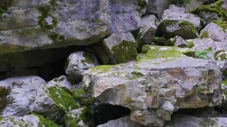 rock wall : Walk in the stone Stock Footage