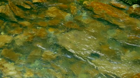 rapids : Water flows through the rocks. Background Stock Footage